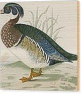 Summer Duck Wood Print