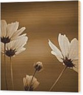 Summer Evening Cosmos Wood Print