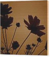 Summer Evening Cosmos  Wood Print