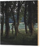 Summer Evening Wood Print by Frits Selier