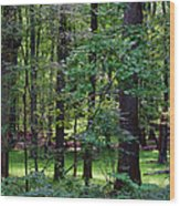 Summer Forest Wood Print