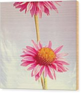 Summer Impressions Cone Flowers Wood Print