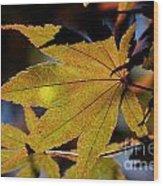 Summer Japanese Maple - 1 Wood Print