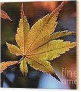 Summer Japanese Maple - 2 Wood Print