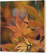 Summer Japanese Maple - 3 Wood Print
