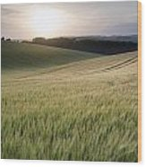 Summer Landscape Image Of Wheat Field At Sunset With Beautiful L Wood Print