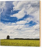 Summer Landscape With Cornfield Blue Sky And Clouds On A Warm Summer Day Wood Print