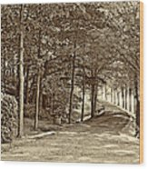 Summer Lane Sepia Wood Print