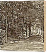 Summer Lane Sepia Wood Print