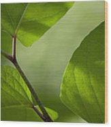 Summer Leaves Wood Print