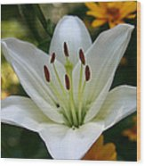 Summer Lily Wood Print