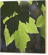 Summer Maple Leaves Wood Print