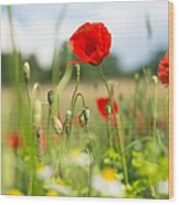 Summer Meadow With Red Poppy Wood Print