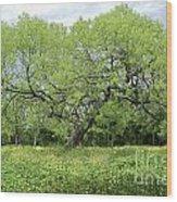 Summer Mesquite Tree Wood Print