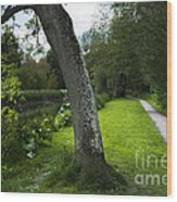 Summer Path Wood Print