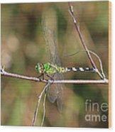 Summer Pondhawk Dragonfly Wood Print