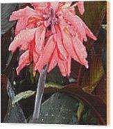 Summer Rain In Maryland Wood Print