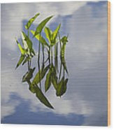 Summer Reflections Wood Print
