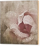 Summer Rose #1 Wood Print
