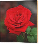 Summer Rose Wood Print