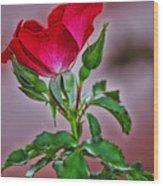 Summer Rose Wood Print