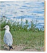 Summer Sea Gull Wood Print