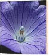 Floral Summer Sensation  Wood Print