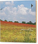 Summer Spectacular - Red Kites Over Poppy Fields Wood Print