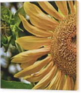 Summer Splendor Wood Print