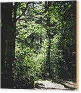Summer Sunlight Wood Print
