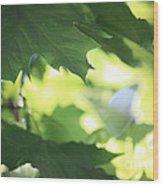 Summer Sunshine Wood Print