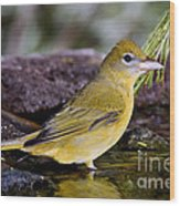 Summer Tanager Female In Water Wood Print