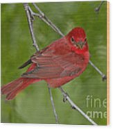 Summer Tanager Male Wood Print
