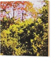 Summer Trees Wood Print