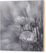 Summer Whispers Iv Wood Print by Priska Wettstein