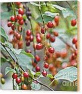 Summer Wild Berries Wood Print