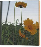 Summer Wild Flowers Wood Print