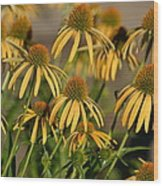Summer Yellow Echinacea Flowers Wood Print