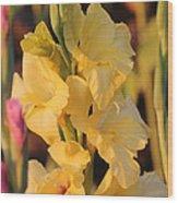 Summer Yellow Gladiolus Wood Print