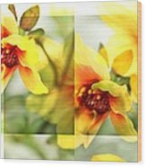 Summer Yellow Two Wood Print by Cathie Tyler