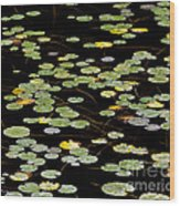 Summer's End Lily Pads Wood Print