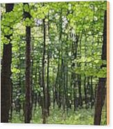 Summer's Green Forest Abstract Wood Print