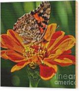 Summers Last Butterfly Wood Print