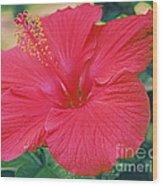 Summer's Last Hibiscus Wood Print