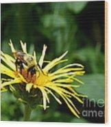 Summertime Bee Wood Print