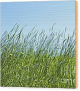 Summertime Grass Wood Print