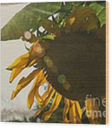 Sun And Sunflower Wood Print