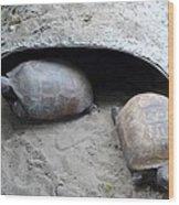 Sun Basking Turtles Wood Print