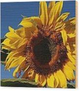 Sun Blessed Wood Print