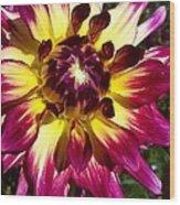 Sun Burst Purple Dahlia Wood Print